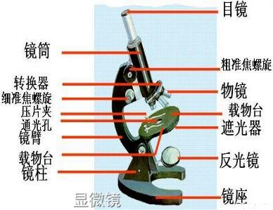 显微镜原理、构造、使用方法及分类等知识介绍