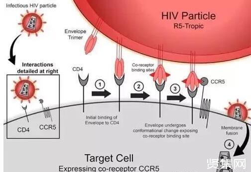伦敦男子艾滋病可能已被治愈,系全球第二位成功治愈艾滋病的患者