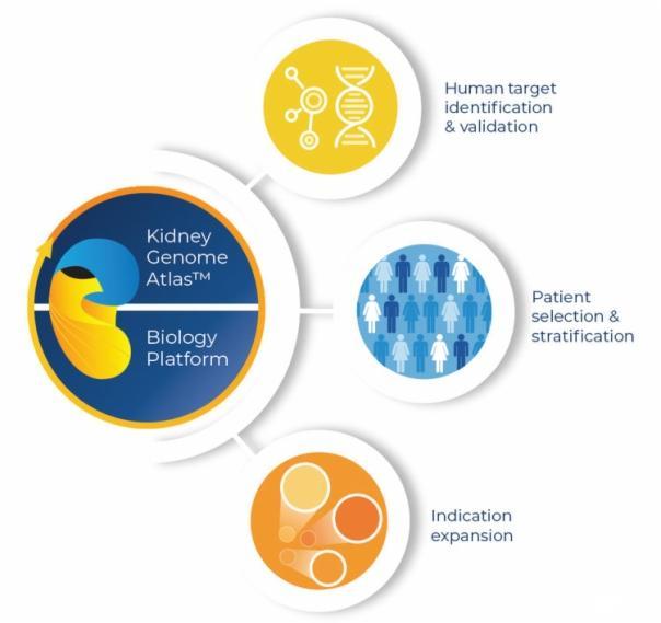 吉利德科学与Goldfinch Bio签署合作,投资超20亿美元开发肾病创新疗法