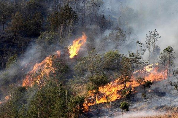 森林防火安全知识学习