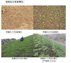 BS活性土壤生态修复技术