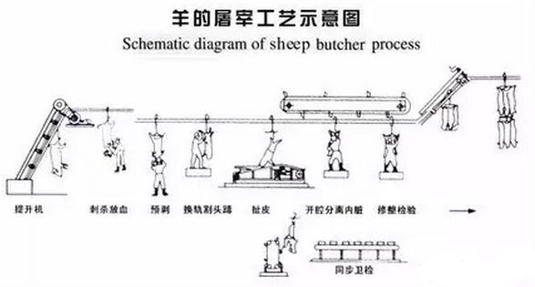 怎么宰羊:大规模宰羊加工流程与要点