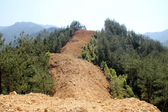 森林防火技术之防火林带