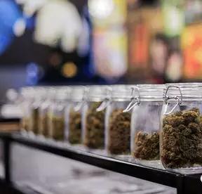 大麻的药用价值研究