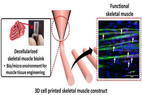 人工肌肉的制造方法