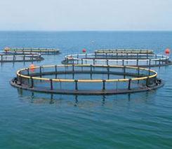 淡水白鲳鱼冬季养殖技术