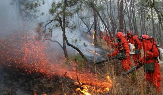 扑救森林火灾的基本方法