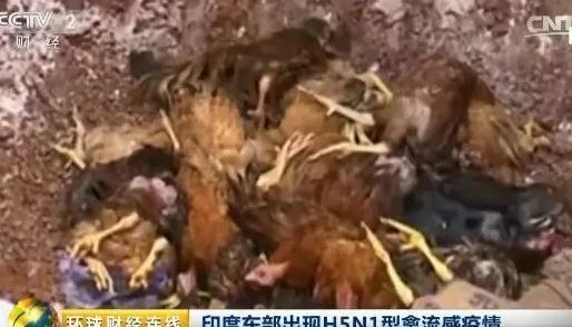 印度、韩国、日本爆发H5N1型禽流感疫情