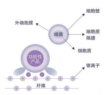 织物(无机、有机、天然)抗菌整理剂的抗菌机理