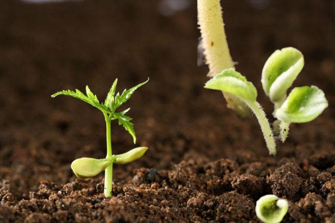 土壤要健康微生物补充是关键!