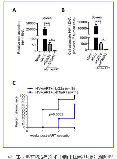 解析干扰素在HIV感染中的作用及其机制