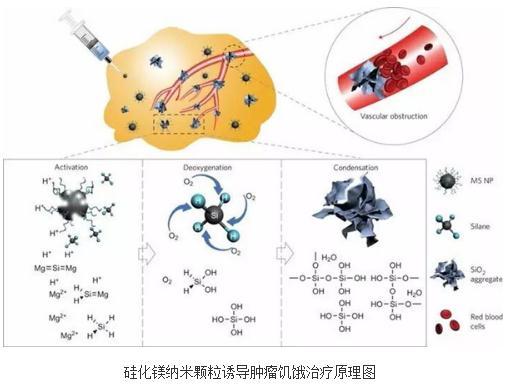 用无毒副作用化学药物的肿瘤特异性化疗研究进程