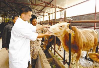 病牛的四种种注射方法汇总