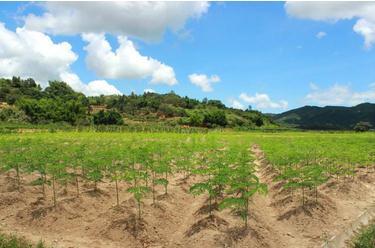 美国Zijar的植物来源蛋白质补充剂从辣木中提取