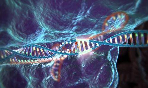 基因编辑是什么?它与转基因是不是一码事?
