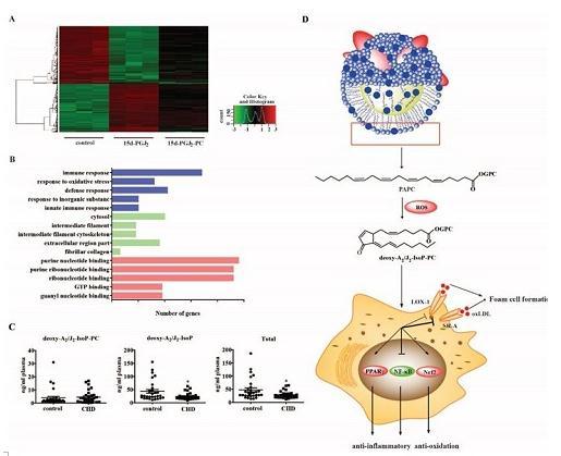 动脉粥样硬化研究:发现磷脂氧化产物deoxy-A2/J2-IsoP-PC