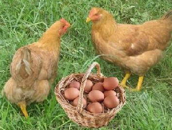 蛋鸡养殖饲料用量计算公式