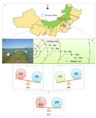 畜禽草耦合模式:牧民养鸡可以促进退化草地恢复