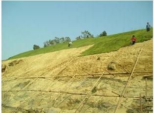 新型无土基质草毯的培育技术及发展前景
