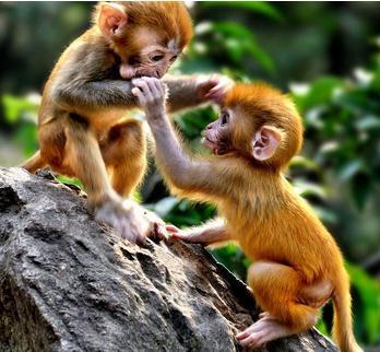 猕猴可以个人养吗?