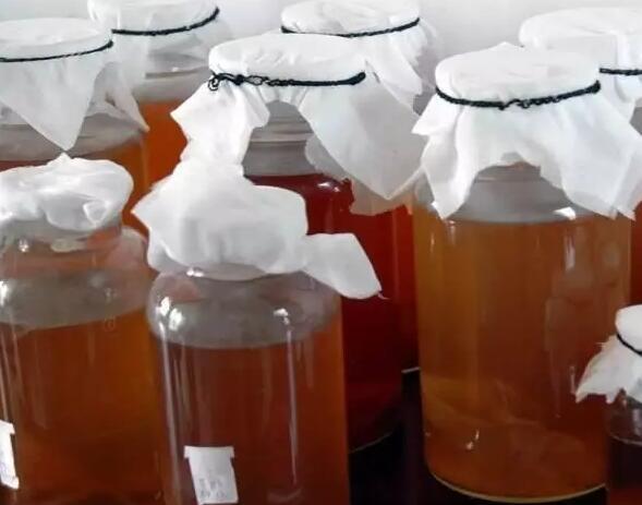 红茶菌的培养方法