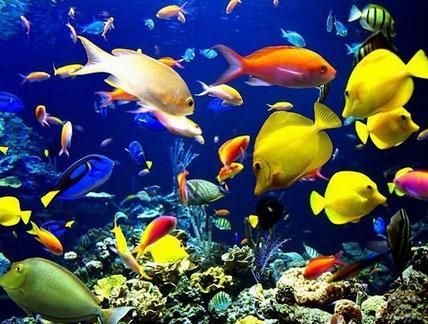 海水观赏鱼对水质有哪些要求?