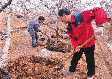 常见果树的施肥建议