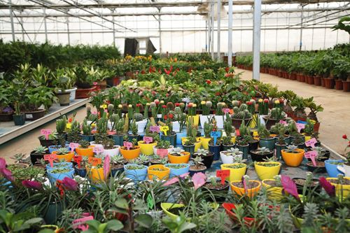 花卉产业发展迅速带来的环保问题如何解决