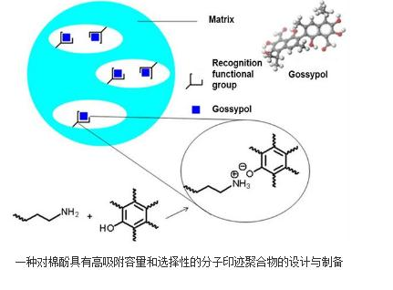 一种棉酚分子印迹聚合物的制备方法 专利申请号:CN201610281786.8