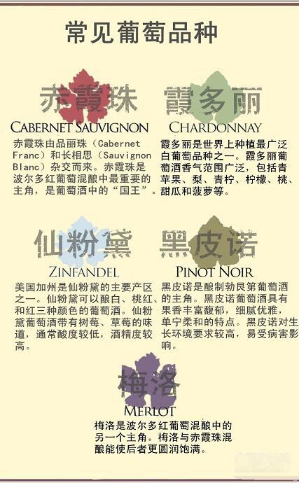 葡萄酒入门者需要掌握的基础知识