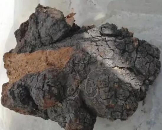 桦褐孔菌——白桦茸的食用方法介绍