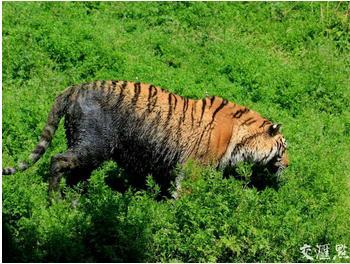动物园池水发黑:南京珍珠泉动物园