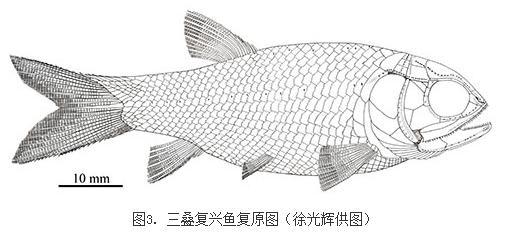 三叠复兴鱼:为研究新鳍鱼类的起源和三叠纪海洋生态系统的复苏提供证据