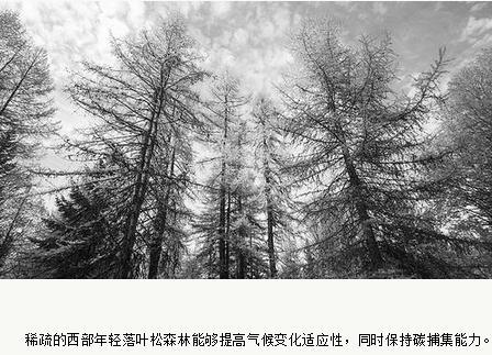 早期稀释森林有利树木生长的研究讨论