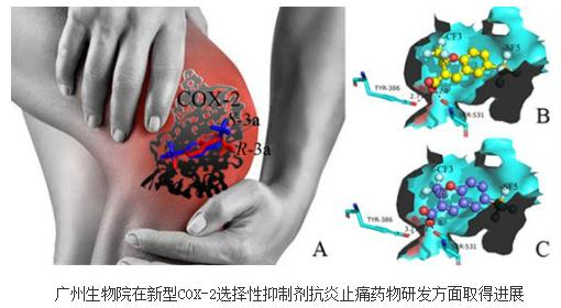 COX-2选择性抑制剂抗炎止痛药物:化合物SF-1001研究进展