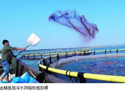 金鲳鱼鱼苗标粗阶段养殖技术要点