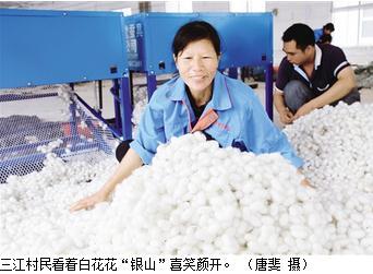 三江村现代生态桑蚕产业扶贫示范园用技术提升蚕茧的质量和产量