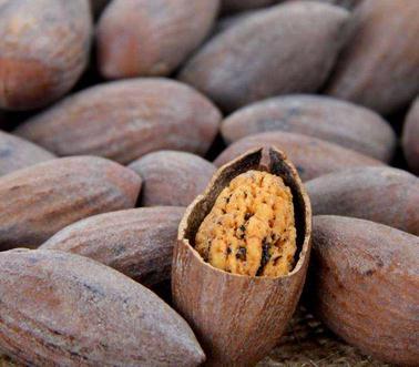香榧的功效与作用、香榧树几年结果
