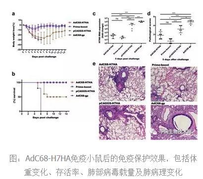 新型H7N9禽流感疫苗——H7N9-H7HA