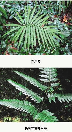 海南发现多种新记录蕨类植物