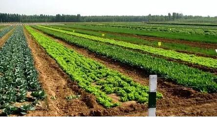 关于有机农产品你必须知道的那些事!