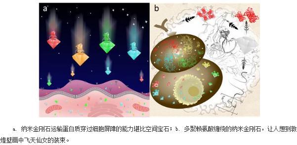 利用功能化的纳米金刚石实现蛋白质的高效装载、跨越细胞屏障和发挥细胞内功能