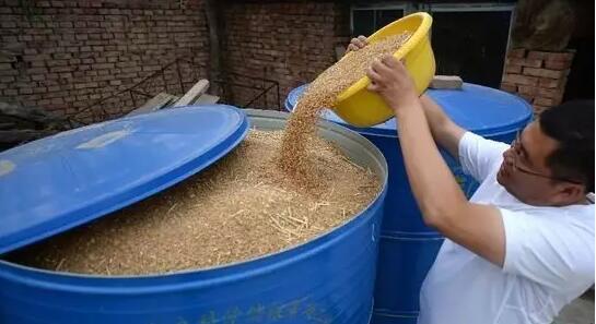 新小麦储存三种好方法