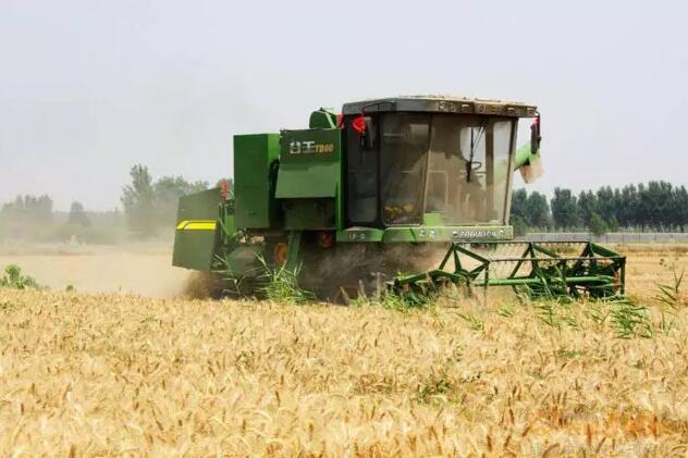 机收倒伏小麦如何提高效率