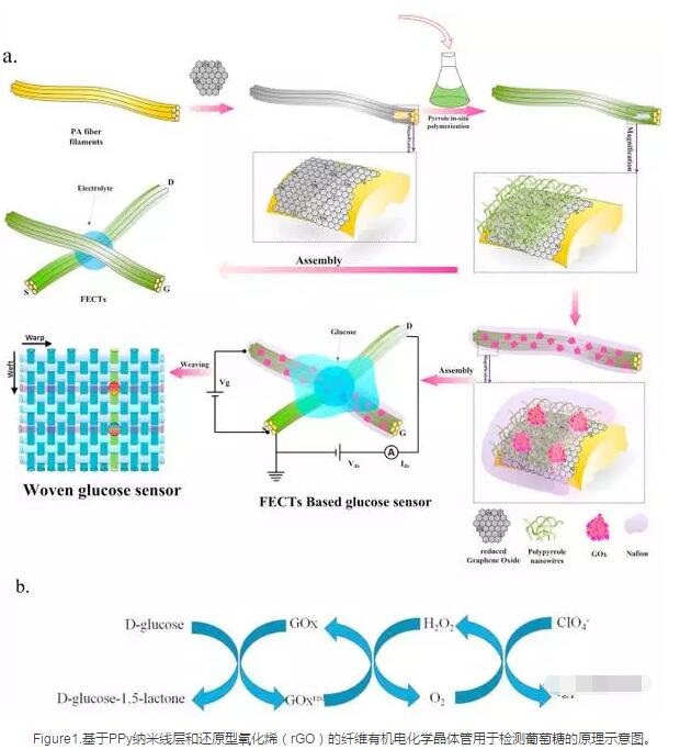 基于聚吡咯纳米线/还原型氧化石墨烯复合物的编织纤维有机电化学晶体管用于检测葡萄糖