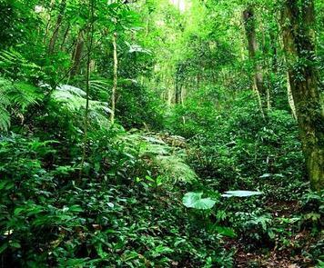 遏制有林地逆转势头,采取严格的林地管理措施