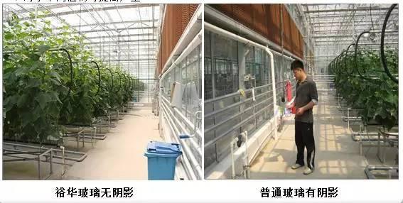 裕华温室专用玻璃在现代设施农业中的应用