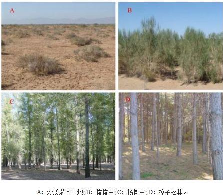 黑河绿洲边缘三种人工防护林(梭梭林、杨树林、樟子松林)土壤环境的研究结果