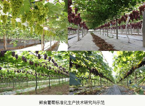 我国葡萄产业在育种、栽培、贮藏、加工技术现状、发展趋势