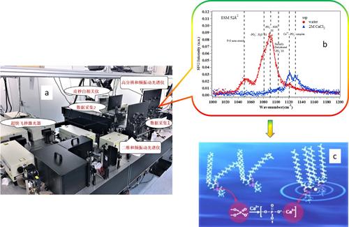 具有亚波数分辨(<1cm-1)的界面和频振动光谱系统